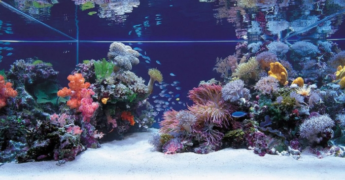 beautiful-fish-tank-with-under-sea-design-ideas How to Decorate Your Boring Fish Tank