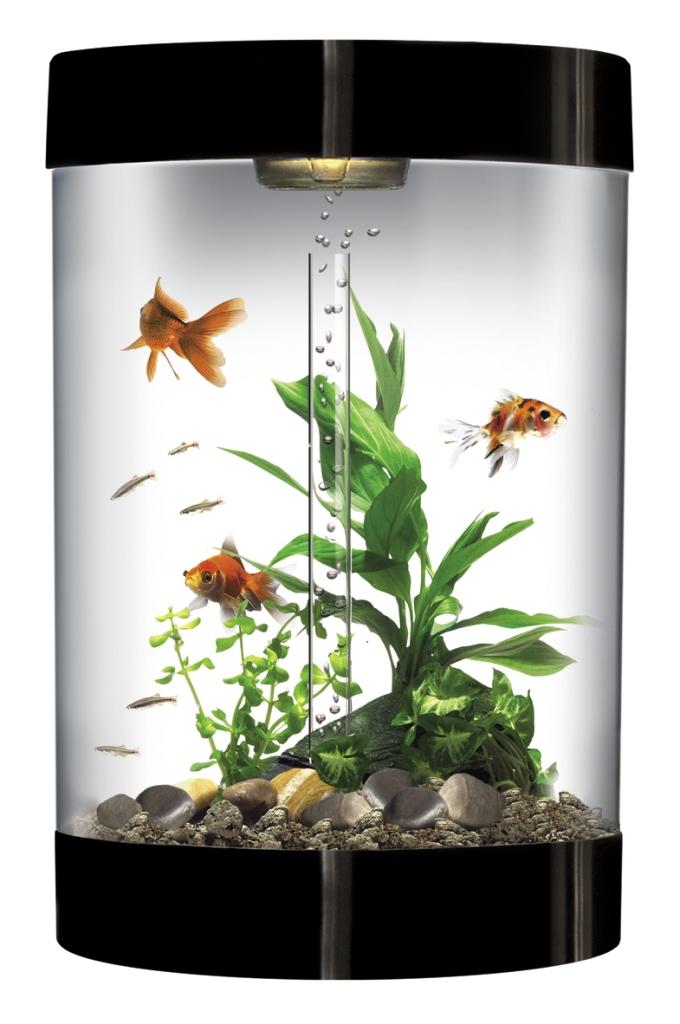 biube_blk_hi-res How to Decorate Your Boring Fish Tank