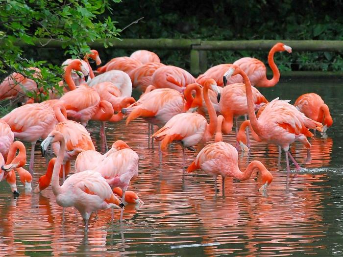 "braces_flamingo_desktop_1600x1200_hd-wallpaper-24182 Strange Facts about the Most Beautiful Bird on Earth ""Flamingo"""
