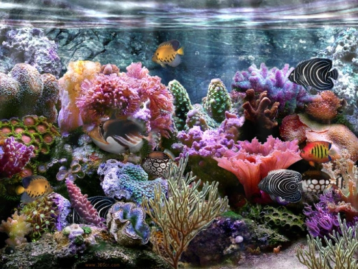 coral-reef-wallpaper-widescreen What Is the Importance of the Magnificent Coral Reefs?