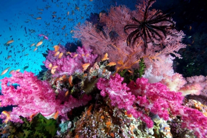 coral-reef What Is the Importance of the Magnificent Coral Reefs?