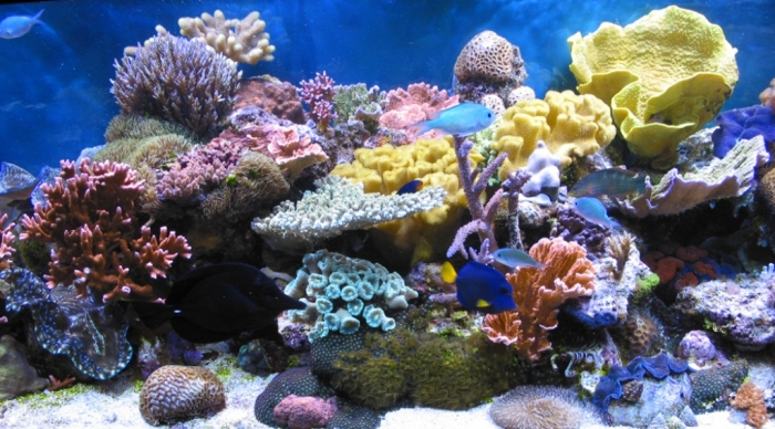 coral2breef-1 What Is the Importance of the Magnificent Coral Reefs?