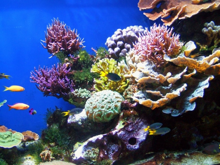 coral_reef_ii_by_kodakboy-d39dk2o What Is the Importance of the Magnificent Coral Reefs?