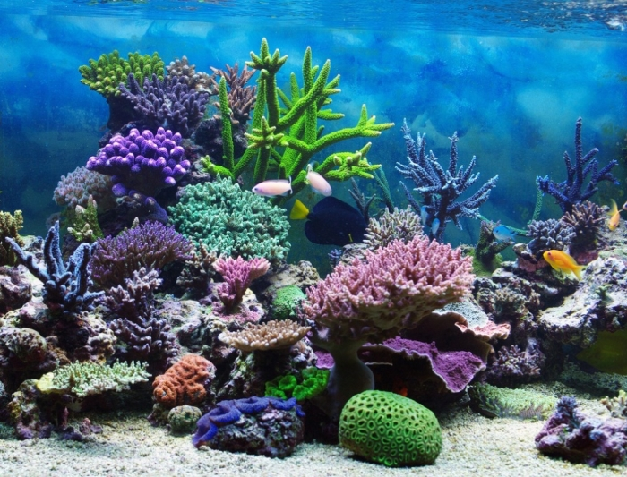 coralreef What Is the Importance of the Magnificent Coral Reefs?