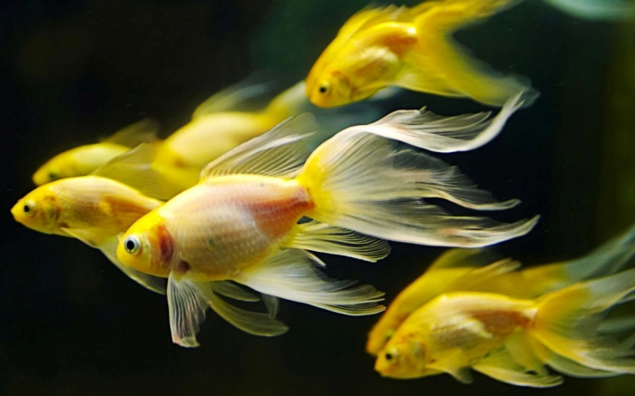 fish-aquarium-qlook What Are the Kinds of Fish You Can Put in Your Fish Tank?