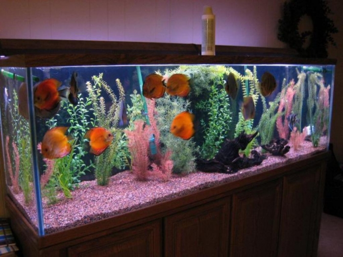 fish-tank-decorations How to Decorate Your Boring Fish Tank