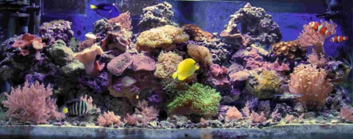 fish-tank-natural-reef-1024x406 How to Decorate Your Boring Fish Tank