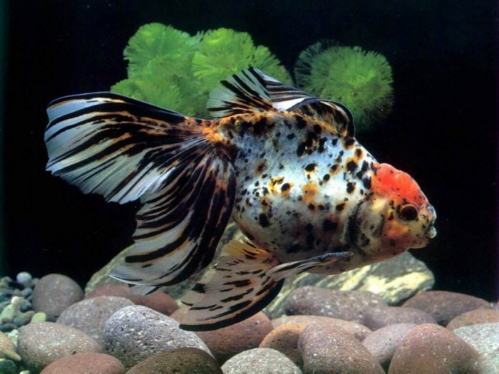 freshwater-tropical-fish-desktop-backgrounds What Are the Kinds of Fish You Can Put in Your Fish Tank?