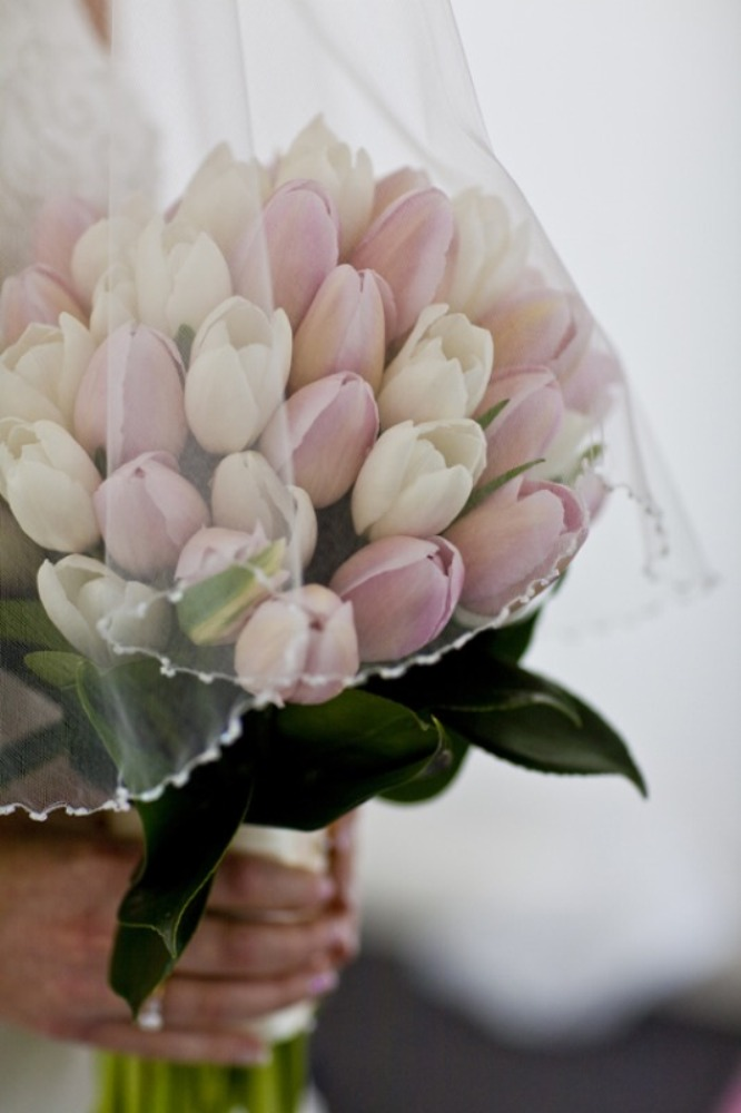 h0a6vyc28c How to Increase the Beauty of White Tulip Flowers