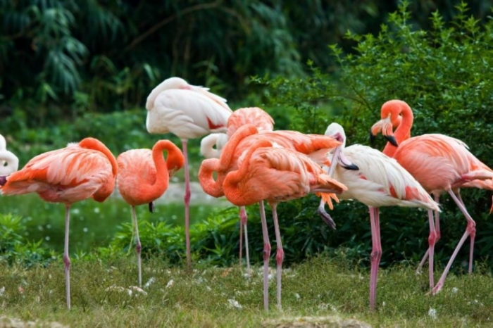 "istock000004767349smallZ Strange Facts about the Most Beautiful Bird on Earth ""Flamingo"""