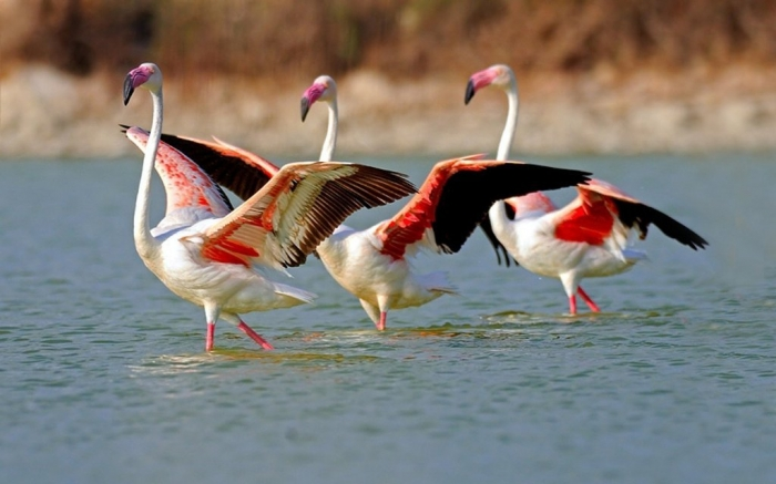 """lake_in_flamingo_birds-wide Strange Facts about the Most Beautiful Bird on Earth """"Flamingo"""""""