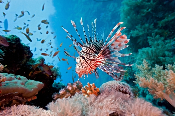 lionfish-coral-reef What Is the Importance of the Magnificent Coral Reefs?