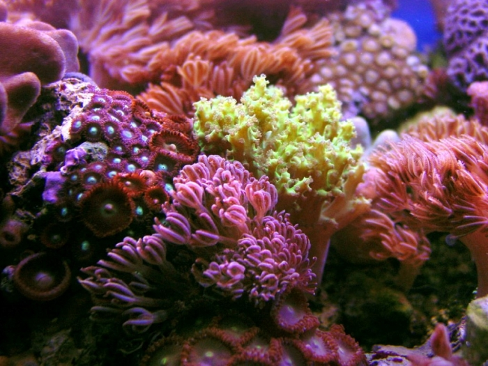 nephzoa1000750 What Is the Importance of the Magnificent Coral Reefs?
