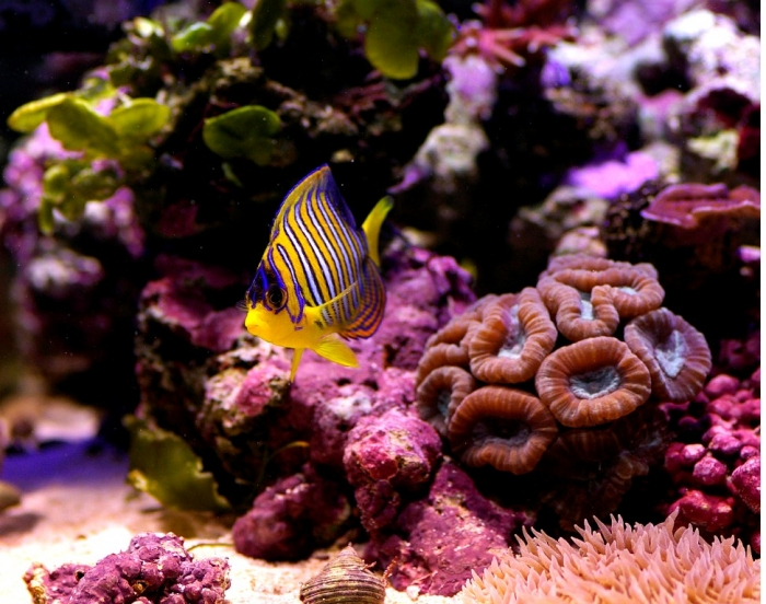 original What Is the Importance of the Magnificent Coral Reefs?