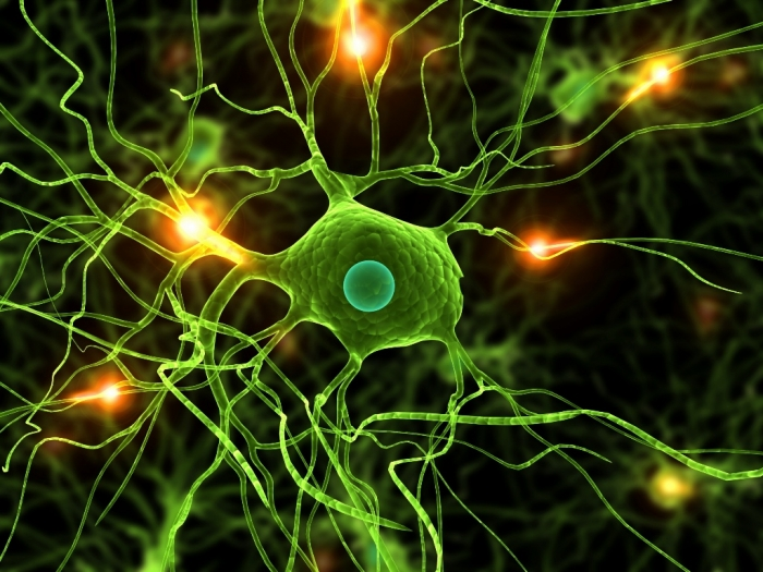 parkinsons-disease1 How To Cure and What To Avoid in Parkinson's Disease?