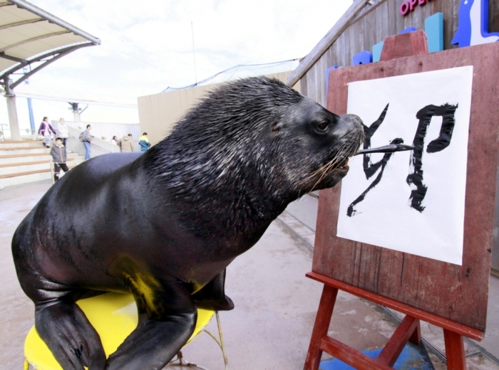 """pb-110103-sea-lion-eg Is It """"Sea Lions Or Sea Bears"""" You Have to Decide"""