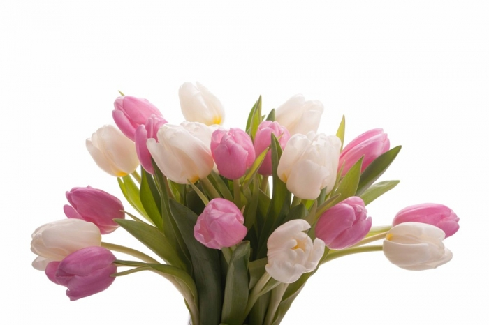 pink-white-tulips-mix-1 How to Increase the Beauty of White Tulip Flowers
