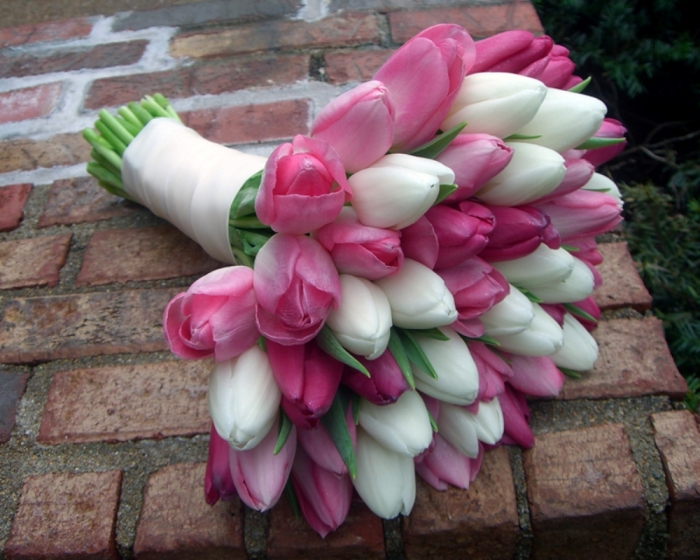 pink-white-tulips How to Increase the Beauty of White Tulip Flowers