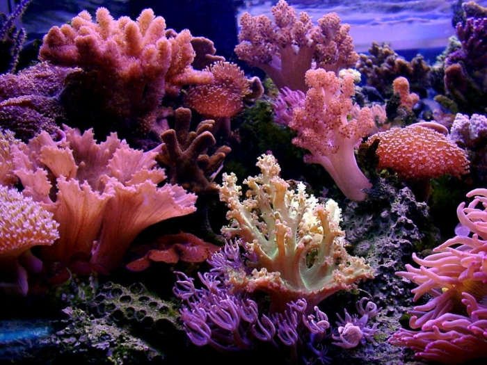 reef-wallpaper-4505-4578-hd-wallpapers What Is the Importance of the Magnificent Coral Reefs?