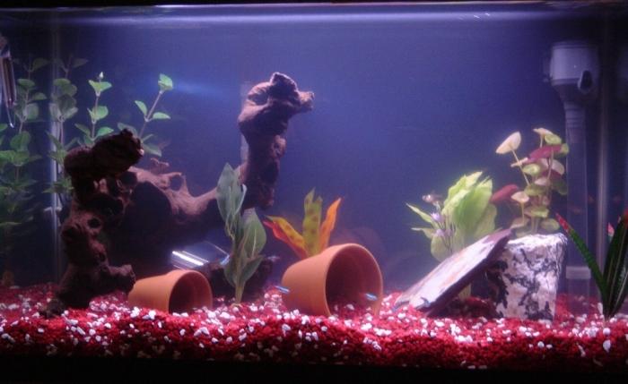 salt-water-fish-tanks1 How to Decorate Your Boring Fish Tank