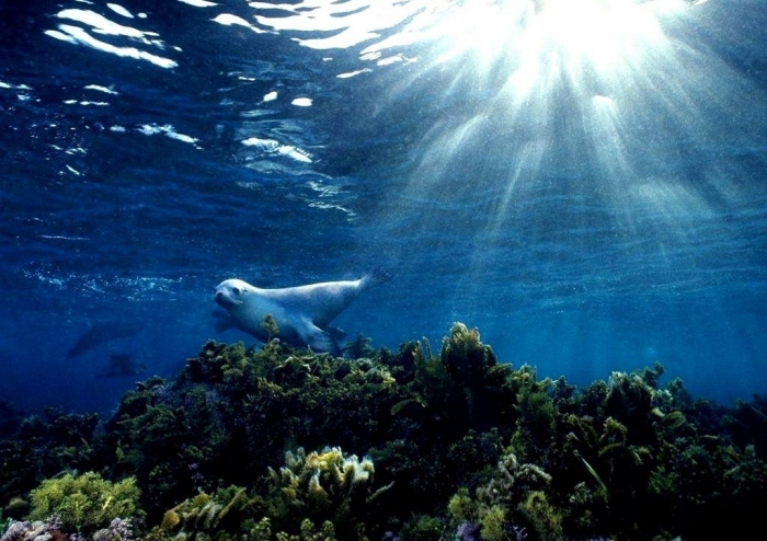 """sea-lion-9631-9983-hd-wallpapers Is It """"Sea Lions Or Sea Bears"""" You Have to Decide"""