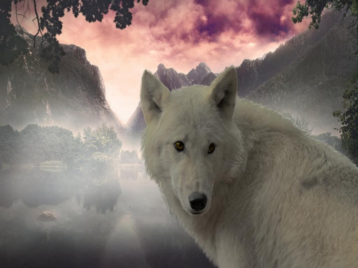 the_white_wolf-1498302 Serious Facts You Must Know about the White Snow Wolf