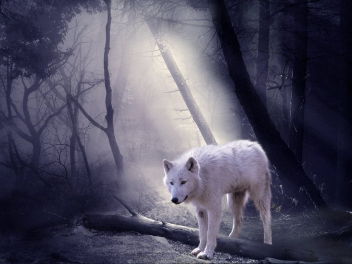 the_white_wolf_by_royalcrownestates-d3ea3ev Serious Facts You Must Know about the White Snow Wolf