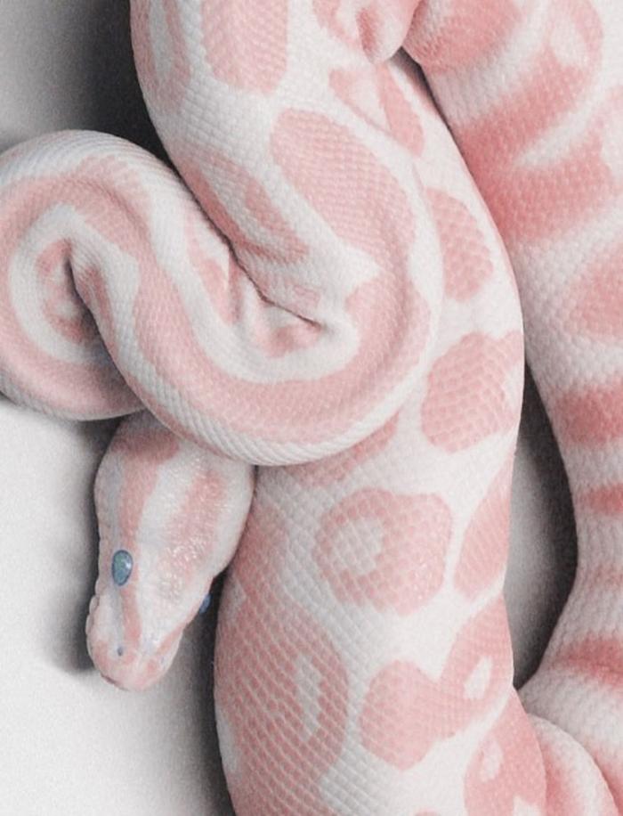 tumblr_mec6hy3DcU1qzktbko1_500 Is the White Snake Just a Legend?