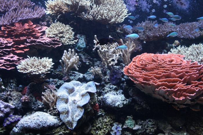 view What Is the Importance of the Magnificent Coral Reefs?