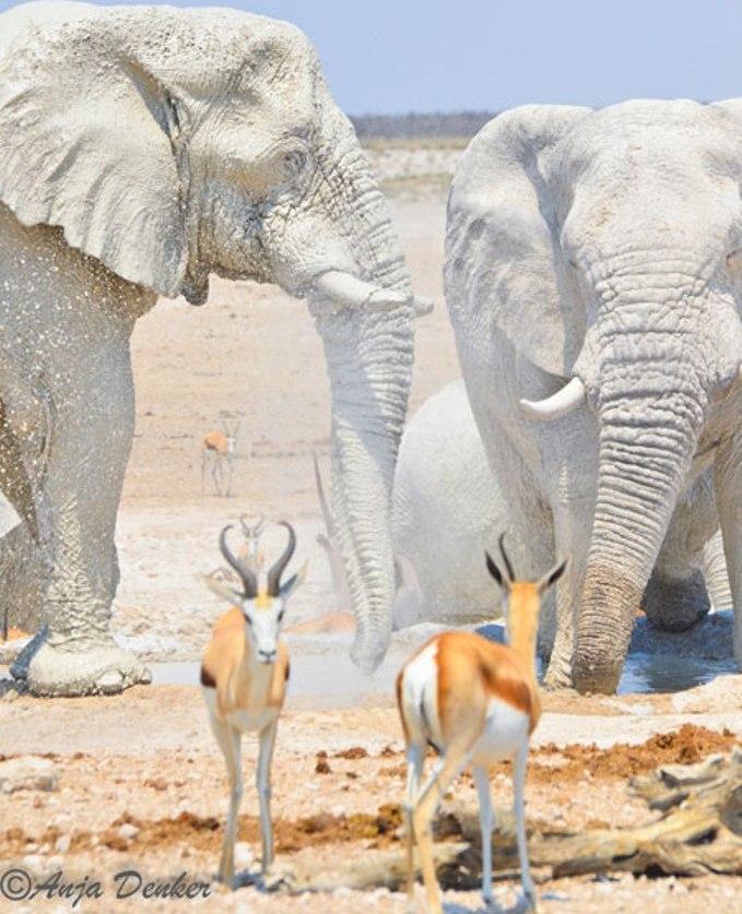 white-elephants The White Elephant Is Not a Legend