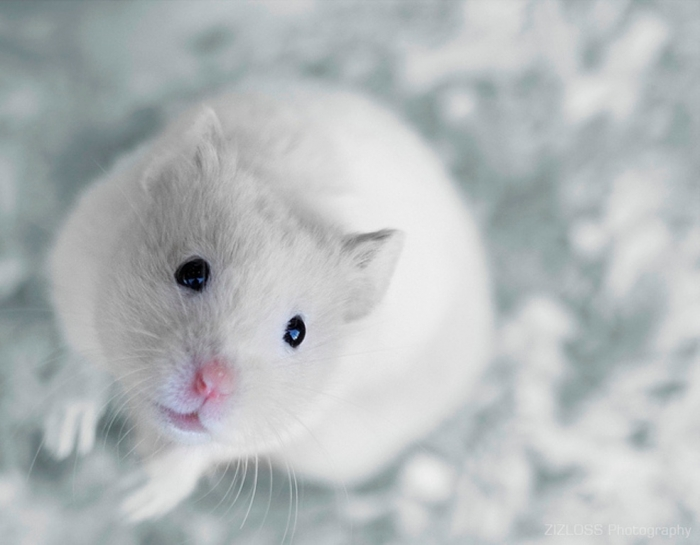 white-mouse Why Are the White Rats Extremely Important?