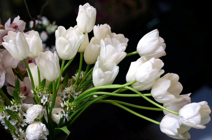white-tulip-bouquet-diane-dua How to Increase the Beauty of White Tulip Flowers