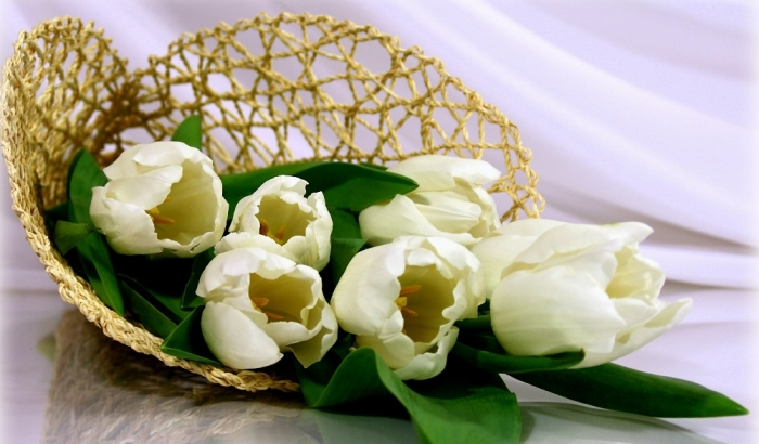 white-tulips-83755 How to Increase the Beauty of White Tulip Flowers