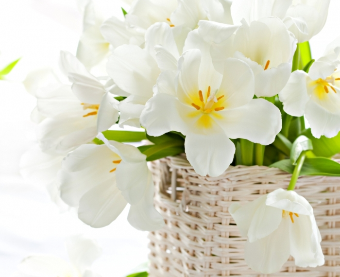 white-tulips-87788 How to Increase the Beauty of White Tulip Flowers