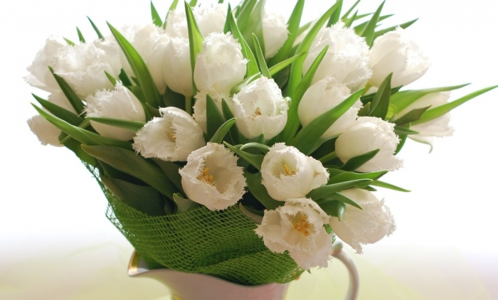 white-tulips-desktop-background-495958 How to Increase the Beauty of White Tulip Flowers