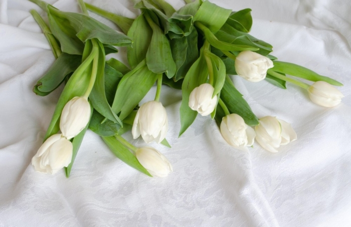 white-tulips-desktop-background-529480 How to Increase the Beauty of White Tulip Flowers