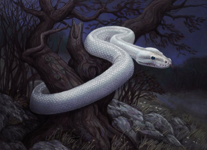 white_snake_by_atenebris-d5kyu80 Is the White Snake Just a Legend?