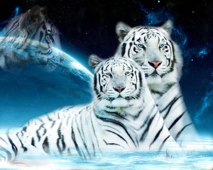 white_tigers_by_water_lily95-d5c44ti Why Are These Rare & Weird Tigers White?
