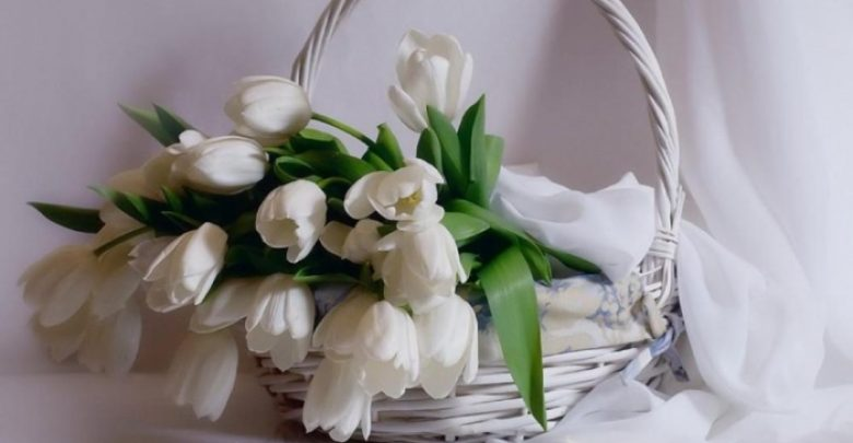 Photo of How to Increase the Beauty of White Tulip Flowers