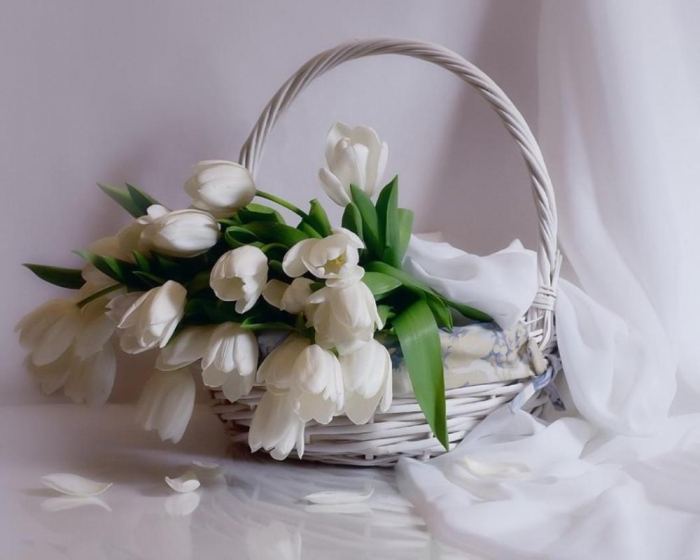 white_tulips-1580705 How to Increase the Beauty of White Tulip Flowers