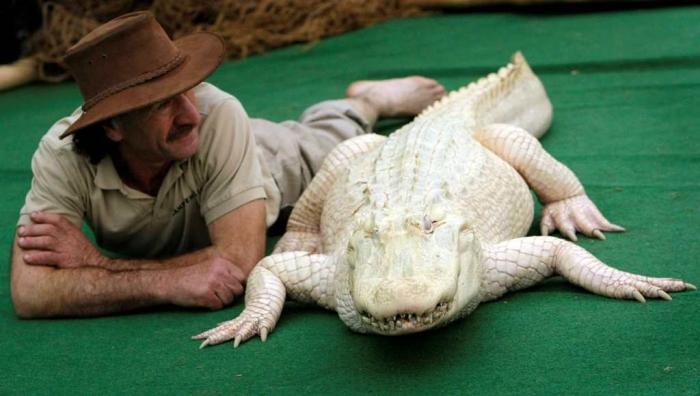 whitedimond Do White Alligators Really Exist on Earth?