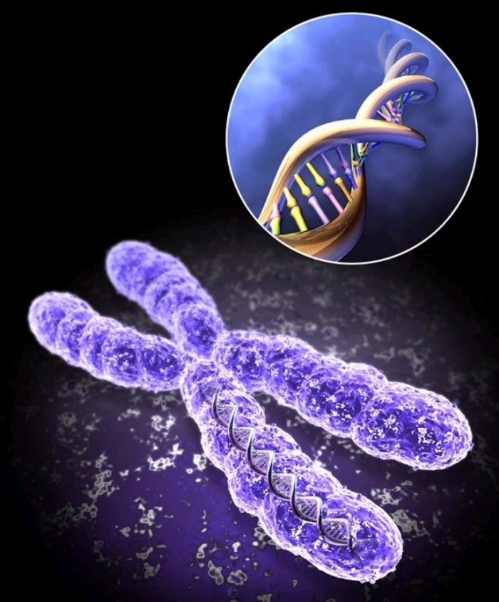 Chromosome How Can I Increase My Chances of Having Twins?