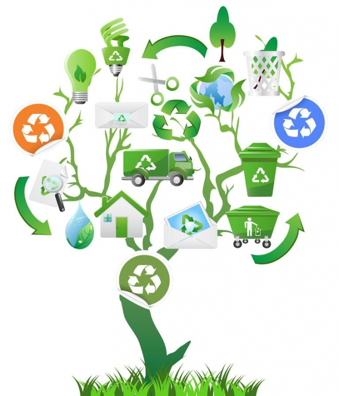RecycleTree How Can I Help the Environment?