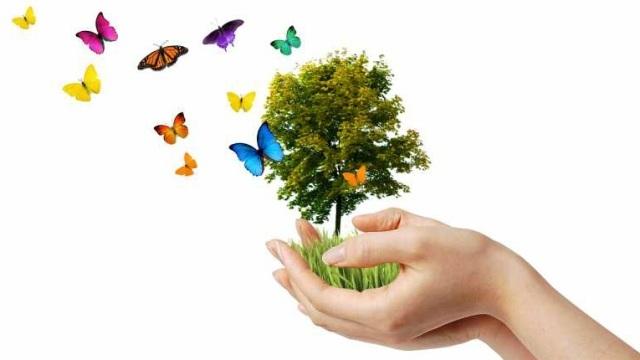 Go green trading system facebook