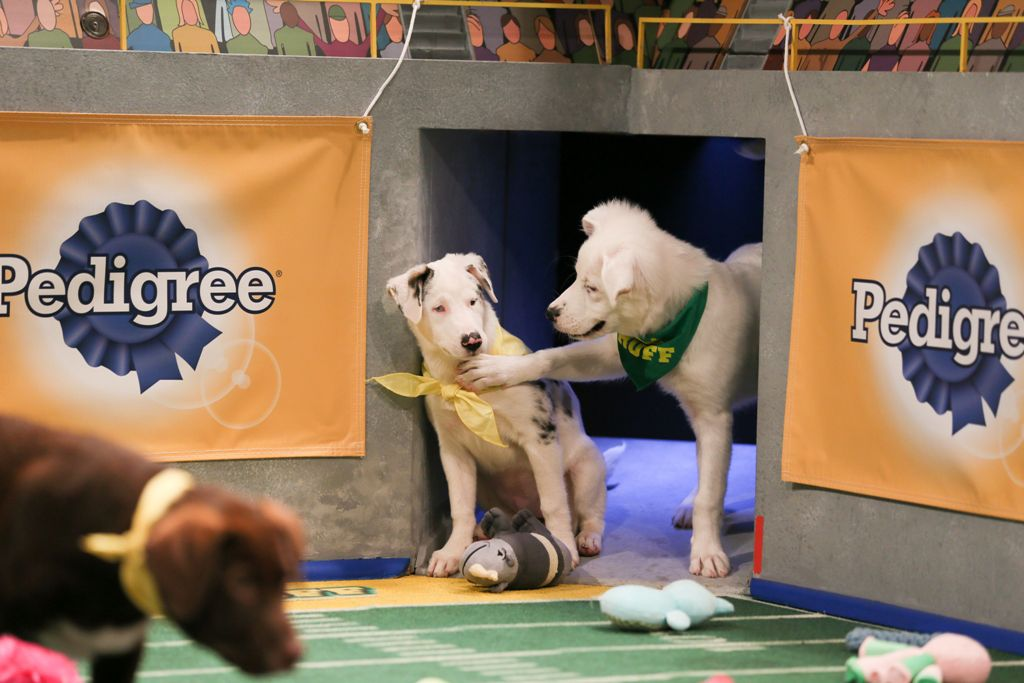 10-Facts-You-Don't-Know-about-Puppy-Bowl-10 5 Important Considerations to Make Before Buying Your Wedding Dress