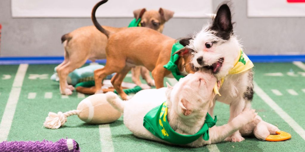10-Facts-You-Don't-Know-about-Puppy-Bowl-11 5 Important Considerations to Make Before Buying Your Wedding Dress