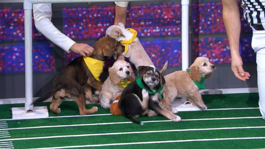 10-Facts-You-Don't-Know-about-Puppy-Bowl-12 5 Important Considerations to Make Before Buying Your Wedding Dress
