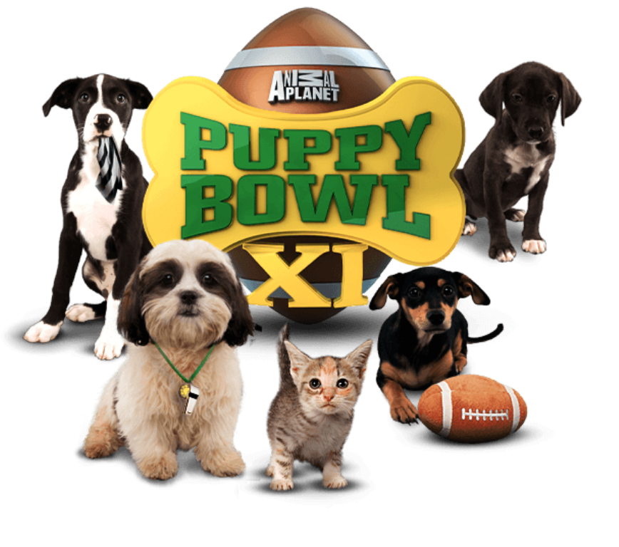 10-Facts-You-Don't-Know-about-Puppy-Bowl-13 Top 10 Facts You Don't Know about Puppy Bowl