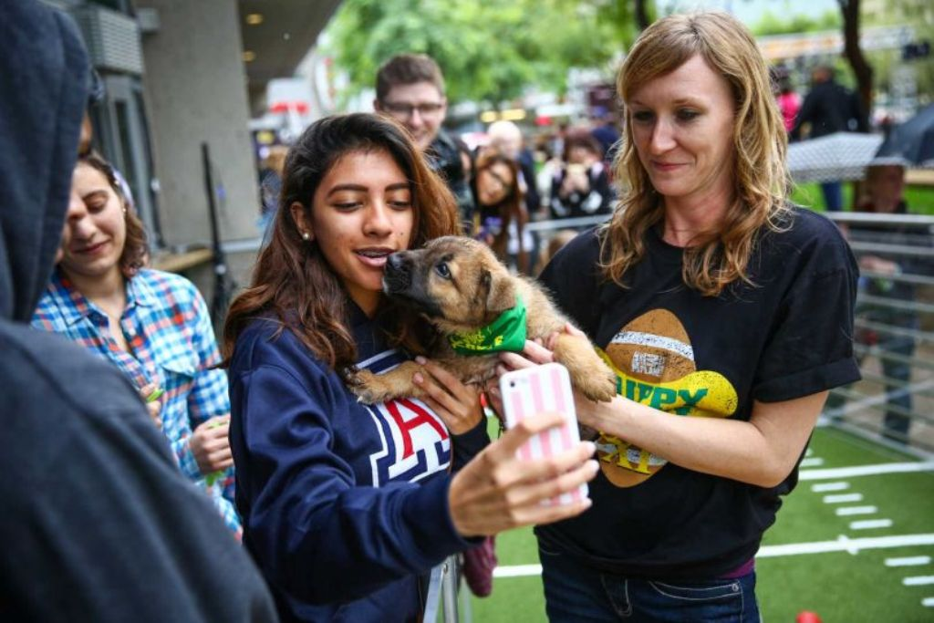 10-Facts-You-Don't-Know-about-Puppy-Bowl-14 Top 10 Facts You Don't Know about Puppy Bowl