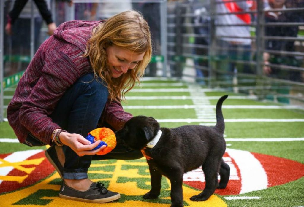 10-Facts-You-Don't-Know-about-Puppy-Bowl-15 5 Important Considerations to Make Before Buying Your Wedding Dress
